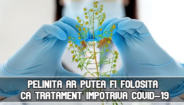 Pelinita ar putea fi folosita ca tratament impotriva COVID-19