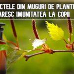 Extractele din muguri de plante – cele mai bune tonice imunitare pentru copii