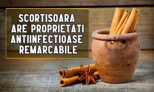 Scortisoara are proprietati antiinfectioase remarcabile