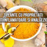 3 plante cu proprietati antiinflamatoare si analgezice