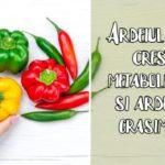 Ardeiul gras creste metabolismul si arderea grasimilor