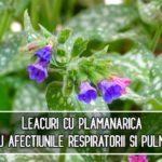 Leacuri cu plamanarica pentru afectiunile respiratorii si pulmonare – Hildegard von Bingen