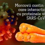 Morcovii conțin compuși care interacționează cu proteinele virusului SARS-CoV-2