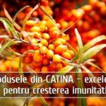 Produsele din catina – excelente pentru cresterea imunitatii