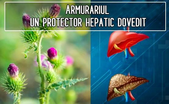 Silimarina din armurariu – un protector hepatic dovedit
