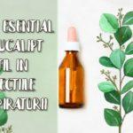 Uleiul esential de eucalipt ajuta in tuse si infectii respiratorii