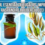 Uleiul esential de eucalipt impiedica raspandirea tuberculozei