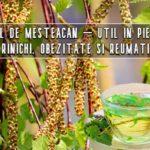 Ceaiul de mesteacan – util in pietre la rinichi, obezitate si reumatism
