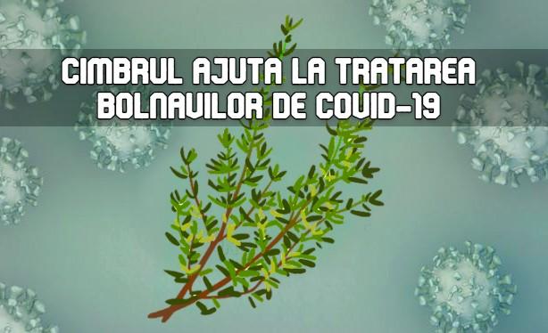 Cimbrul ajuta la tratarea bolnavilor de COVID-19