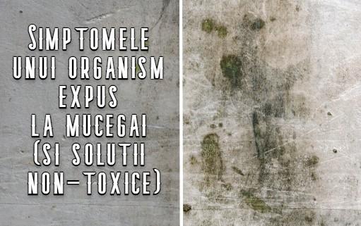 Simptomele unui organism expus la mucegai (si solutii non-toxice)