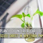 12 plante care pot fi crescute direct in apa (fara pamant)
