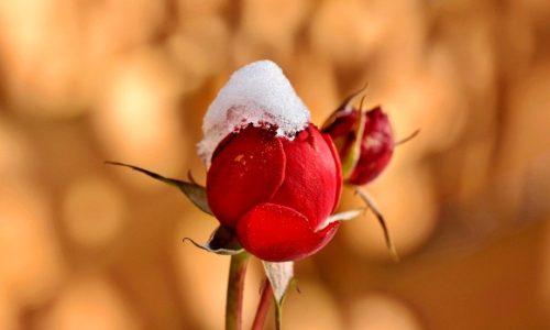 Ce sa facem cand inima noastra este rece