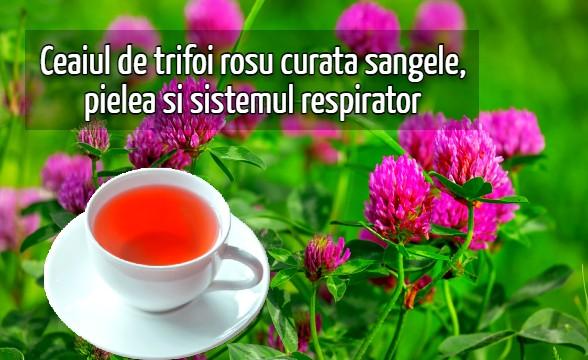 Ceaiul de trifoi roșu curata sangele, pielea si sistemul respirator
