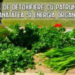 Cura de detoxifiere cu patrunjel reda sanatatea si energia organismului