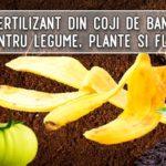 Fertilizant din coji de banane pentru legume, plante si flori