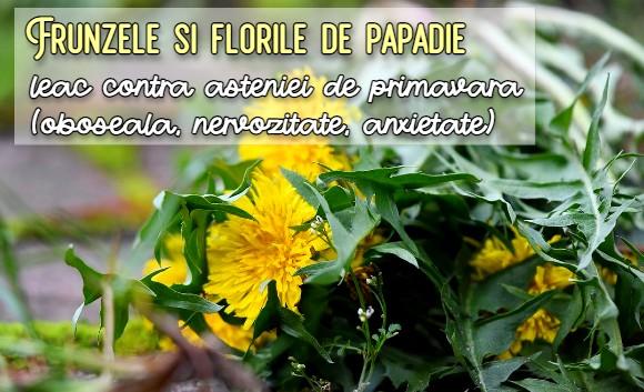 Frunzele si florile de papadie combat astenia de primavara