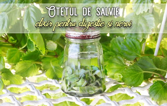 Oteul de salvie - un elixir pentru digestie si nervi