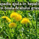 Papadia ajuta in hepatite si boala ficatului gras