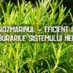Rozmarinul - eficient in tulburarile sistemului nervos