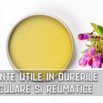 Trei plante utile in durerile articulare si reumatice