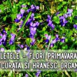 Violetele curata organismul, hranesc si vindeca