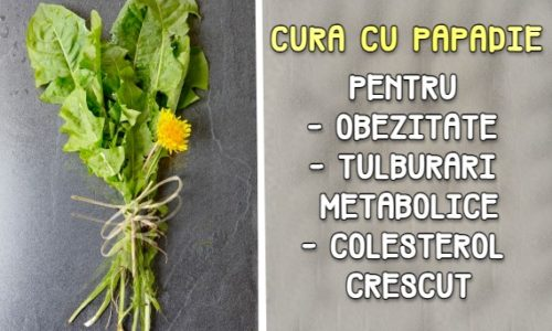 Cura cu papadie pentru obezitate, colesterol