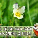Ceaiul de trei-frati-patati curata sangele si pielea