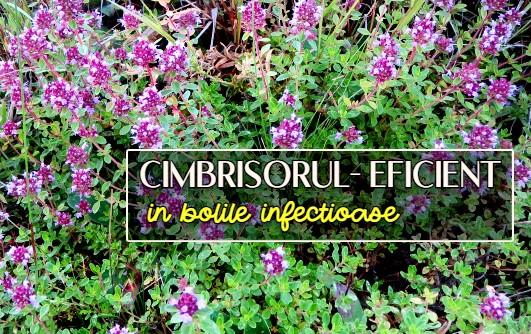 Cimbrișorul – unul din cele mai bune remedii pentru bolile infecțioase