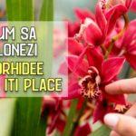 Cum sa clonezi o orhidee care iti place