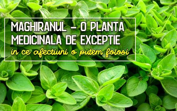 Maghiranul - o planta medicinala de exceptie
