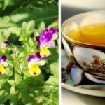 Panselutele - flori vindecatoare