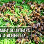 Poluarea scurteaza viata albinelor si le imbolnaveste