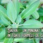 Salvia – un minunat ajutor in toate formele de cancer