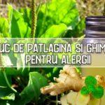 Suc de patlagina si ghimbir pentru alergii
