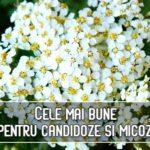 Cele mai bune plante pentru candidoze si micoze