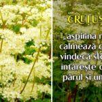 Cretusca - aspirina naturii
