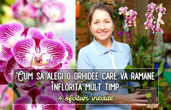 Cum sa cumperi cea mai sanatoasa si durabila orhidee
