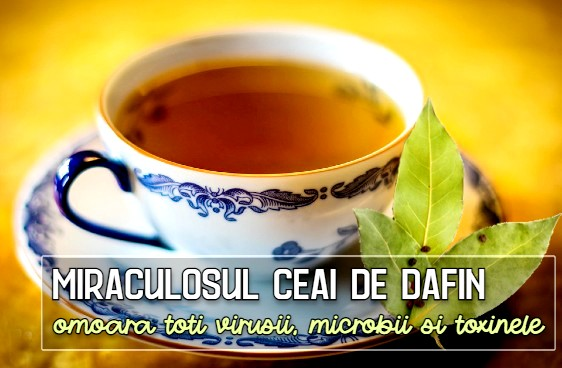 Miraculosul ceai de dafin