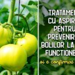 Tratament cu aspirina pentru prevenirea bolilor la rosii
