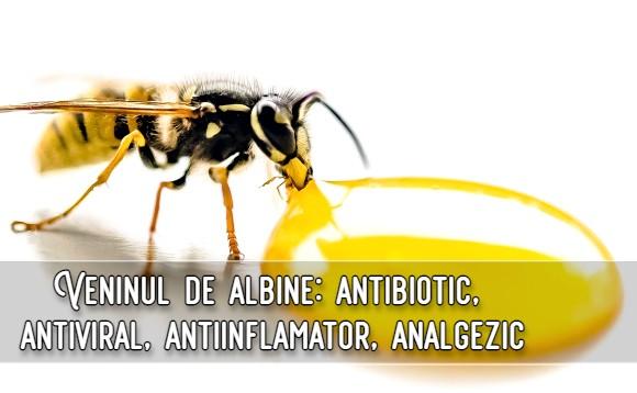 Veninul de albine - antiviral, antibiotic, analgezic