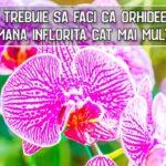Ce sa faci ca orhideea sa ramana inflorita cat mai mult timp posibil