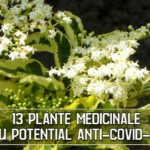 13 Plante medicinale cu potential anti-COVID-19