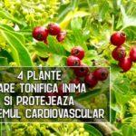 4 plante care tonifica inima si protejeaza sistemul cardiovascular