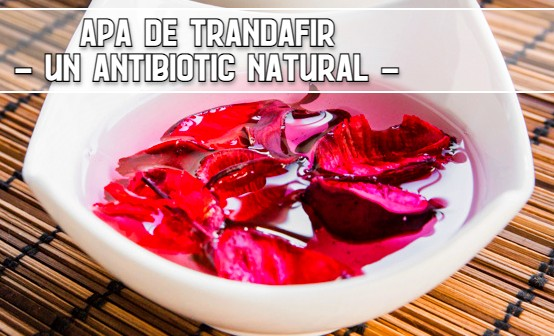 Apa de trandafir, un antibiotic natural