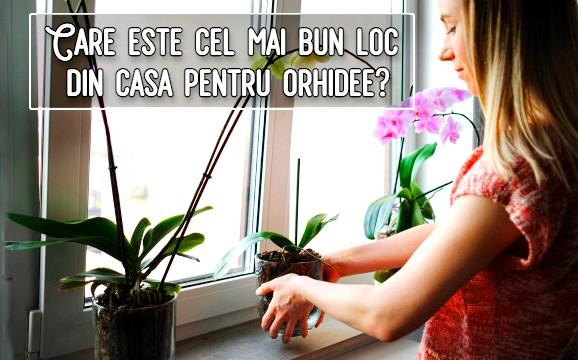 Care este cel mai bun loc din casa pentru orhidee