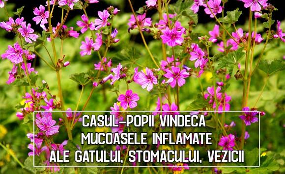 Casul-popii vindeca inflamatiile mucoaselor gatului, stomacului, vezicii