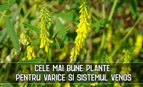 Cele mai bune plante pentru varice si sistemul venos