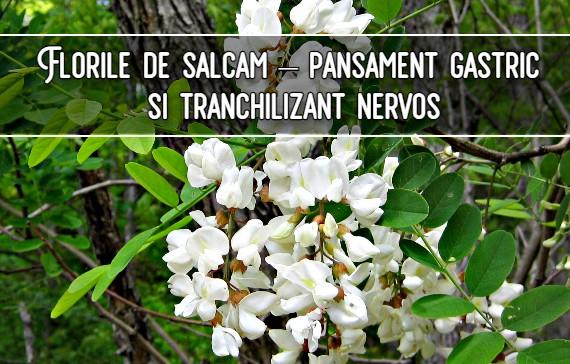 Florile de salcam – pansament gastric si tranchilizant nervos