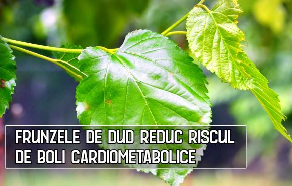 Frunzele de dud reduc riscul de boli cardiometabolice