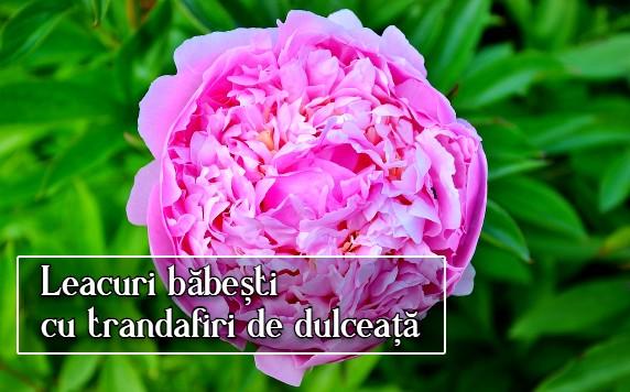 Leacuri babesti cu trandafiri de dulceata
